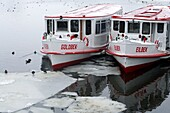 Two excursion passenger boats of the Alster Boat Fleet in white with red roof laying idle on the frozen Alster lake, Hamburg, Germany, Europe