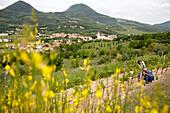 Weinreben, ökologischer Anbau, Weingut und Agriturismo Ca' Orologio, Venetien, Italien