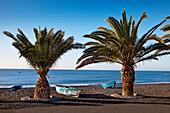 Fishing boats and palm tree at beach, La Lajita, Fuerteventura, Canary Islands, Spain
