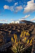 Weingut Bodega La Geria, Weinanbaugebiet La Geria, Lanzarote, Kanarische Inseln, Spanien, Europa