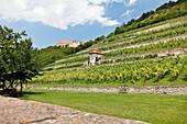 Weingut, Weinberg, Weinanbau an der Saale und Unstrut, Freyburg, Sachsen-Anhalt, Deutschland