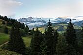Blick über Tannen und Berge, Alpenpanorama, Steinernes Meer, Hochkönig, Maria Alm, Pinzgau, Zell am See, Berchtesgadener Alpen, Salzburg, Österreich