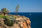 Cliff with palmtree and Agavae, Algarve, Atlantic Ocean, Portugal, Europe
