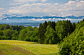 Forest at lake Starnberg in spring, Alps with Zugspitze, Upper Bavaria, Germany, Europe