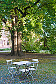 Old tree in Abbey yard, Abbey Druebeck, Druebeck, Harz, Saxony-Anhalt, Germany