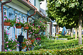 Row of houses with potted plants, Andreasberg, Harz, Lower Saxony, Germany