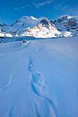 Mount Athabasca 3, 491 m 11, 453 ft in winter seen Sunwapta River, Jasper National Park Alberta Canada
