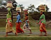 Asia, Asian, balance, balancing, Bali, Balinese, bu. Asia, Asian, Balance, Balancing, Bali, Asia, Balinese, Bundles, Carry, Carrying, Cloth, Heads, Holiday, Indonesia, Indonesian, L