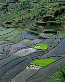 agriculture, banaue, crops, farm, farming, fields, . Agriculture, Banaue, Crops, Farm, Farming, Fields, Green, Holiday, Irrigate, Irrigating, Irrigation, Landmark, Philippines, Asia