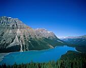 Alberta, Banff, Canada, lake, mountain, national, p. Alberta, Banff, Canada, North America, Holiday, Lake, Landmark, Mountain, National, Park, Peyto, Pristine, Tourism, Travel, Vaca