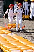 cheese market, Alkmaar, Netherlands