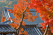 A telephoto view shows the kawara ceramic tile roof of the Meditation Hall at Tenryuji Temple, located in the Arashiyama district of northwestern Kyoto, Japan.