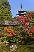 A wide-angle view shows the Hokutei pond garden in autumn with Goju-no-to Pagoda inside Ninnaji Temple, a World Heritage Site located in the northern area of Kyoto, Japan.