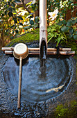 A detailed view shows the stone tsukubai water basin by the garden at Daiho-in, a sub-temple inside Myoshinji Temple complex, located in Kyoto, Japan.