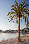 Palm tree at beach, Platja des Traves, Port de Soller, Soller, Majorca, Spain