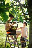 Two boys under a cherry tree, Klein Thurow, Roggendorf, Mecklenburg-Western Pomerania, Germany
