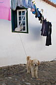 Cat in a window and dog on the street with clothes hanging on a line, Mertola, Alentejo, north of the Algarve, Portugal, Europe