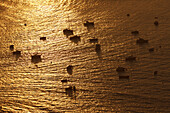 Boats in the bay of San Sebastian in the sunset light, Donostia, Province of Guipuzcoa, Basque Country, Euskadi, Northern Spain, Spain, Europe