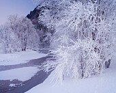 Hoar frost on trees at Ennstal valley, Styria, Austria, Europe