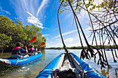 A man and a woman in a kayak paddling through the roots of mangroves, Island of Santa Cruz, Galapagos Ecuador, South America