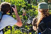Man and woman taking photos of a red footed booby, Tower of Genovesa, Galapagos, Ecuador, South America