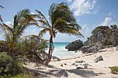 Palm trees on the beach at the Tulum Ruins, Tulum, Riviera Maya, Quintana Roo, Mexico