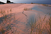 Bird tracks on a wandering dune, Curonian Lagoon North of Pervalka, Curonian Spit, Baltic Sea, Lithuania, Europe