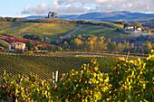 Chianti classico vineyards in autumn. Chianti classico vineyards in autumn