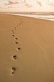 Footprints in the sand. Footprints in the sand