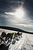 Dog team pulling sled in snowy landscape. Dogsledding, Snow, Sun, Morning, Speed