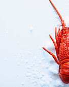 Close up of lobster on ice