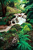 Stream of iron waters and lush green vegetation in Terra Nostra Park Parque Terra Nostra  Furnas, Sao Miguel island, Azores, Portugal