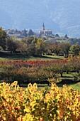 The Luberon vineyards near Bonnieux, Vaucluse, Provence-Alpes-Côte d´Azur, France