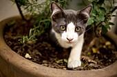 A kitten plays in a flowerpot in Mexico City.