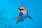 Photograph of a smiling dolphin in the water, ACUARIO NACIONAL, AV 3 AND CALLE 62, OUTER HAVANA, HAVANA, CUBA