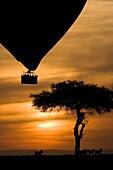 Hot Air Balloon over the Masai Mara National Reserve, Kenya