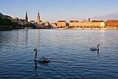 Swans at the Binnenalster, view of town hall and Jungfernstieg, Hamburg, Gemany, Europe