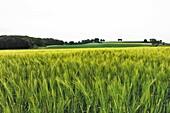 Belgium, Wallonia, grain fields