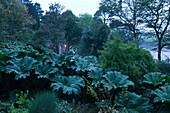 U.K, Cornwall, Garden of St Just in Roseland at twilight,Gunnera manicata