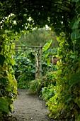 Cornwall, U.K,The Eden Project,Outdoor Biome