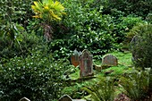 U.K, Cornwall, Garden and celtic cemetery of St Just in Roseland