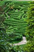 U.K , Cornwall, Glendurgan Garden, the Maze