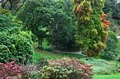 U.K , Cornwall, Glendurgan Garden