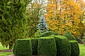 U.K,Sussex,Nymans Gardens and Manor,Topiary
