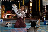 Myanmar (Burma), Shan State, Inle Lake, the village of Nga Hpe Chaung, built in 1944, the wooden stilt monastery Kyaung Nga Hpe, nicknamed cats jumping monastery, attracts many tourists coming to see the cats jumping, this activity used to being made by m