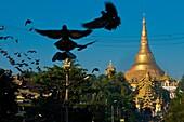 Myanmar (Burma), Yangon State, Yangon, Kandawgyi Quarter, Gabaraye Pagoda avenue, east entrance of Shwedagon Pagoda, pilgrims can buy food to give it to the numerous pigeons around the pagoda