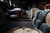 France, Midi-Pyrénées, Gers(32), Salles-d'Armagnac, Salles castle, wine cellar from 17th century