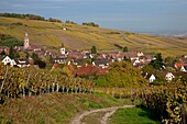 France, Haut-Rhin (68), Riquewihr, picturesque village of Alsace, labeled The Most Beautiful Villages of France, located on the Wine Route of Alsace, in the autumn landscape, (aerial view)