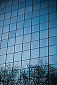 Tree Branch Reflections on Modern Office Building, London, England