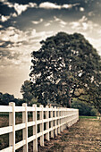 Country fence and oak tree in Willamette Valley, Oregon, USA. Farms and farming., Country fence and oak tree